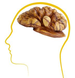 Грецкие орехи источник силы и разума